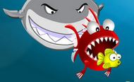 Cá lớn ăn cá bé 2015