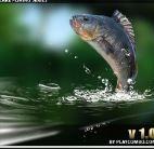 Câu cá trong rừng xanh