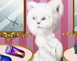 Tỉa lông cho mèo Angela xinh đẹp