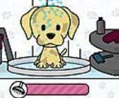 Salon thú cưng
